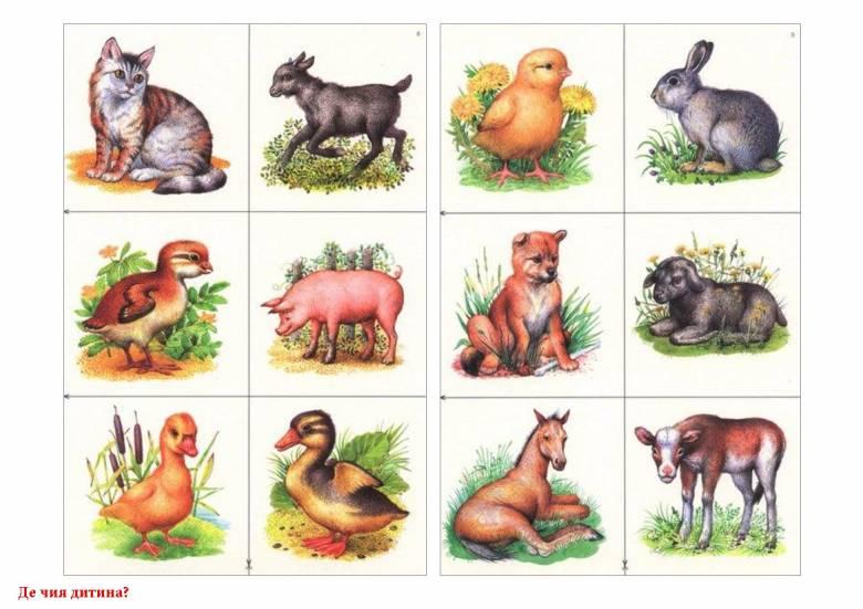 Картинки для детей детеныши домашних животных
